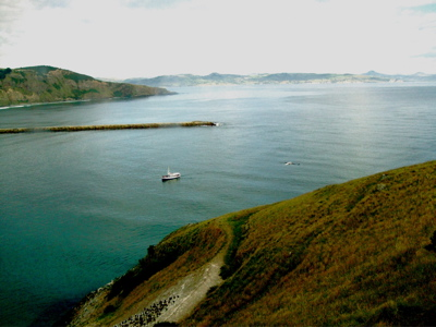 View from Taiaroa Heads